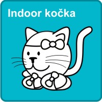 Indoor kočka